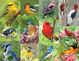 Springbok Alzheimer & Dementia Jigsaw Puzzles - Birds of a F